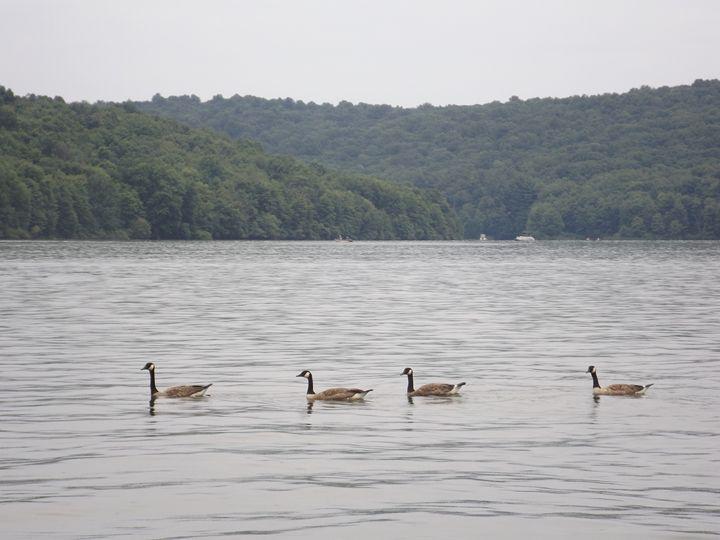 Four Geese in a Row - EllArtz Studios
