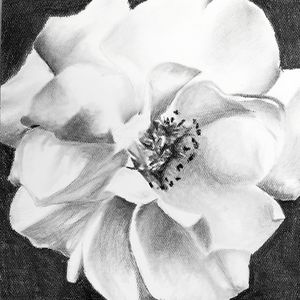 Flower 3 (gardenia)