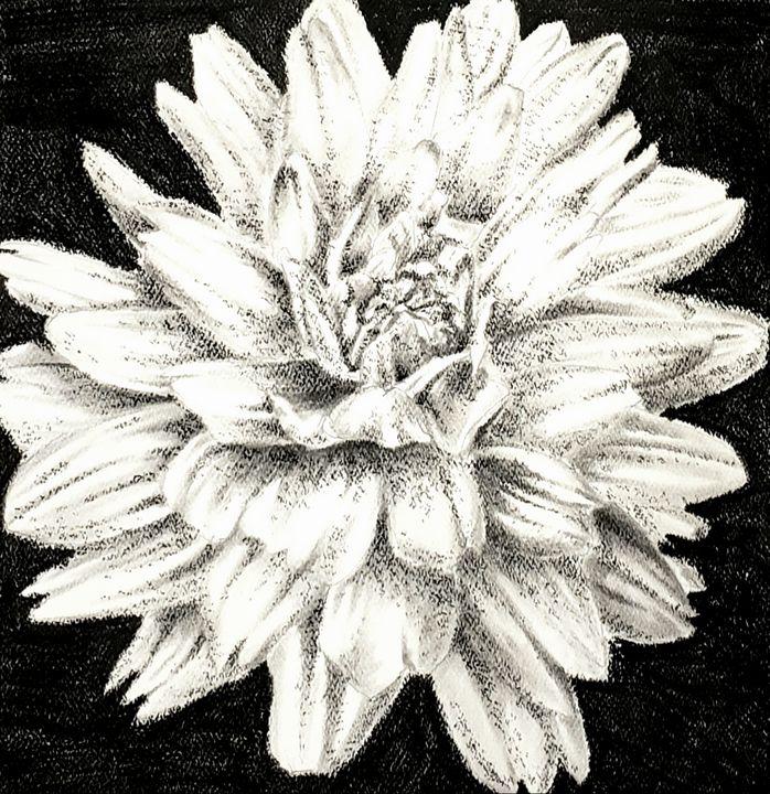 Flower 4 (Dahlia) - Aaroncesh Art