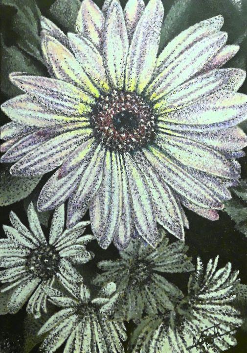 Daisies - Aaroncesh Art