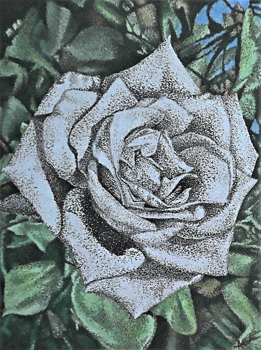 Black and White Rose - Aaroncesh Art