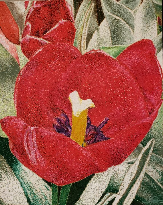 Close Up of a Red Tulip - Aaroncesh Art