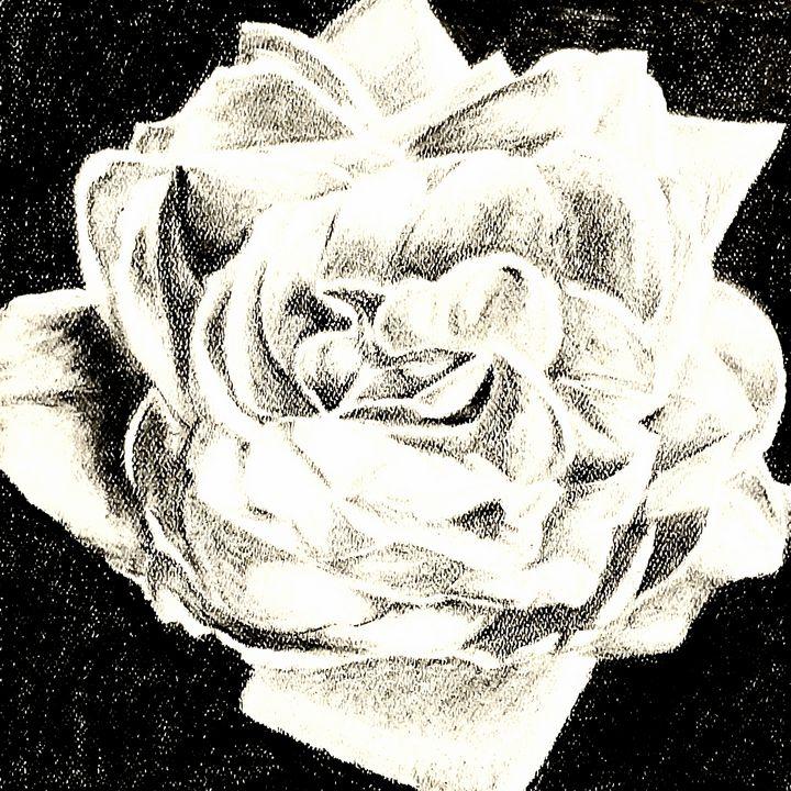 Flower1 (Wild Rose) - Aaroncesh Art
