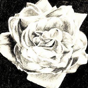 Flower1 (Wild Rose)
