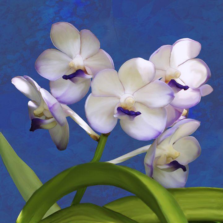 Ascocenda Orchid - Vittek Studios