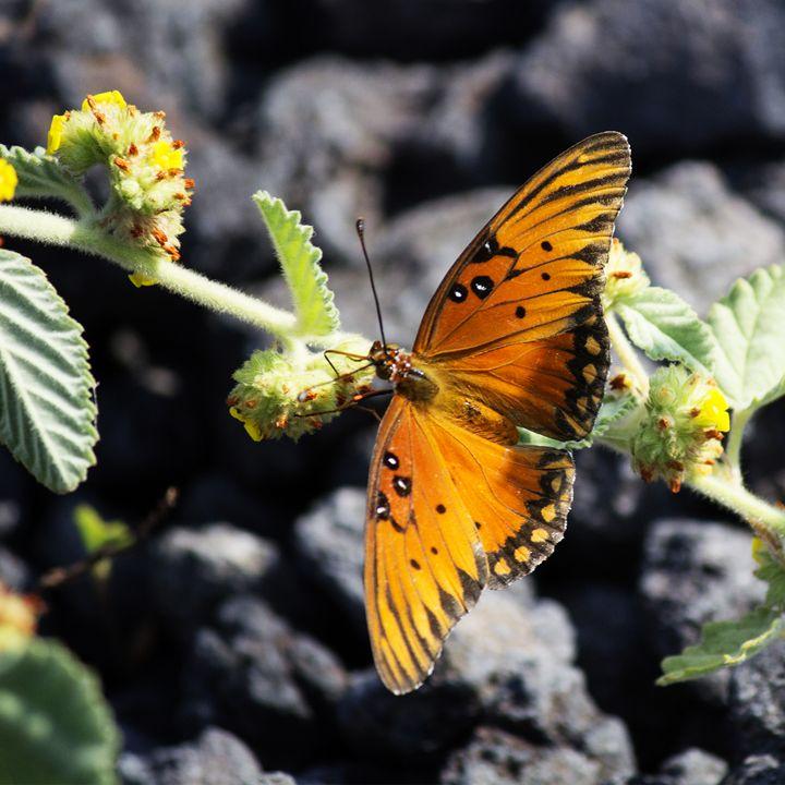 Butterfly 2 - Vittek Studios