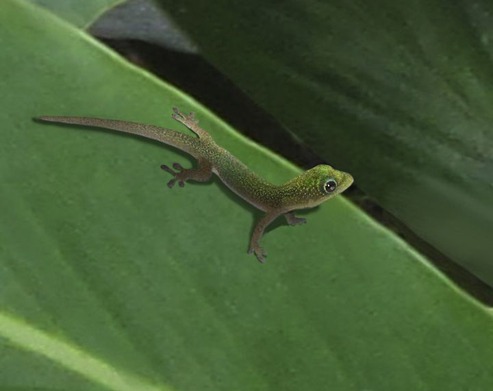 Baby Gecko - Vittek Studios