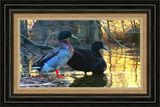Large 36x20.25  Matted and Framed