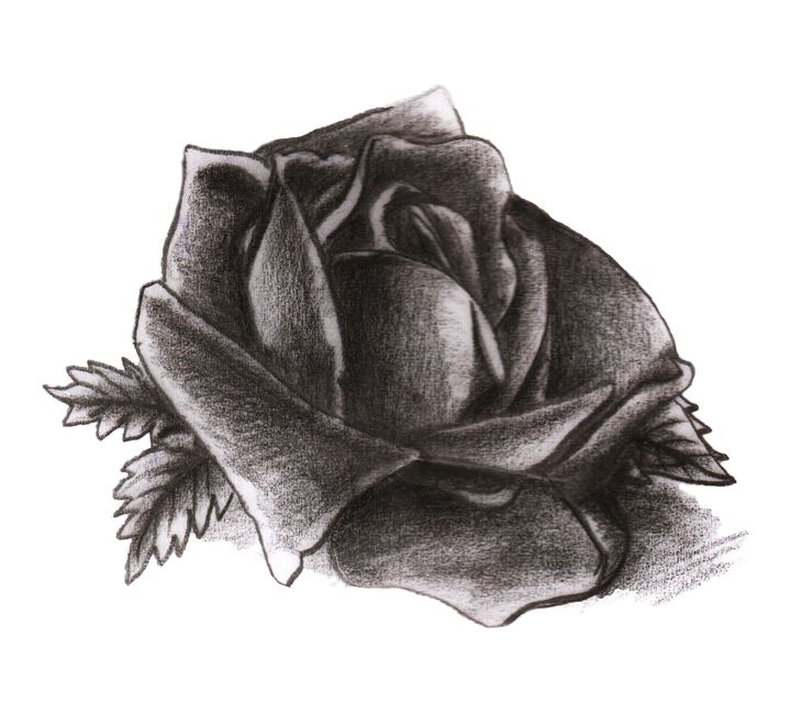 Rose design - Henrik Pacrami
