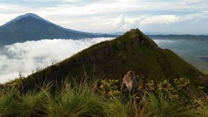 Volcanic Monkey