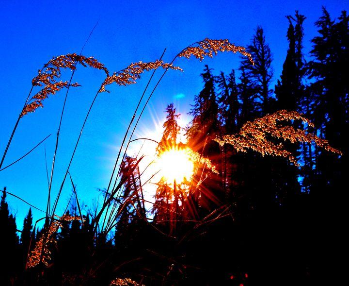 Mountain Grass - Aili Thomas