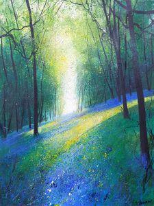 Light Across Bluebell Woods