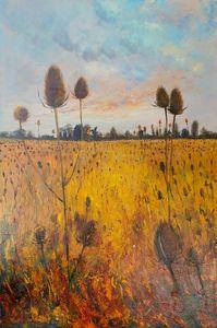 Golden Teasel Field Evening