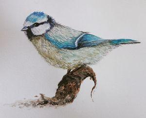 A blue tit, watercolour
