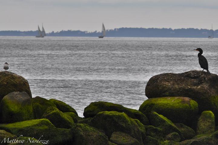 On the Rocks - Nardozza Photography