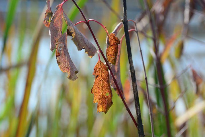 Leaves - Nardozza Photography