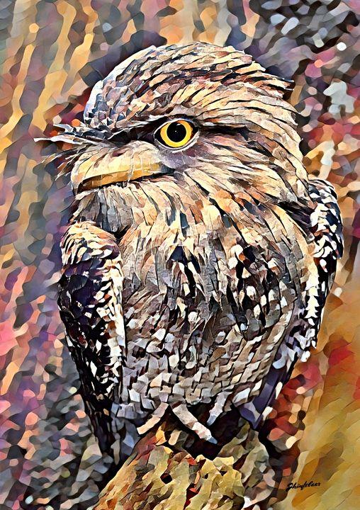 Tawny Frogmouth. Australian Bird -  Jezzasway