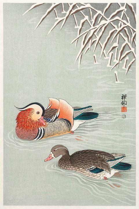 Mandarin ducks -  Jezzasway