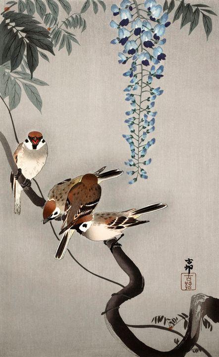 Ring Sparrows at Wisteria -  Jezzasway
