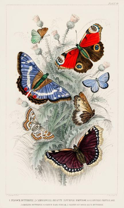 Butterflies -  Jezzasway