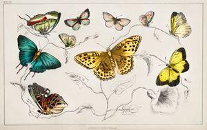 Various Butterflies