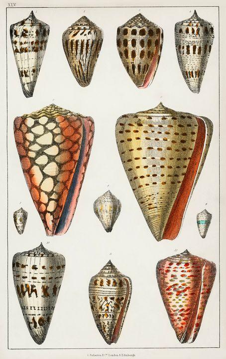 Collection Of Shells -  Jezzasway