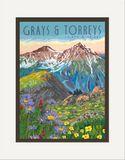 Matted Print: Grays & Torreys