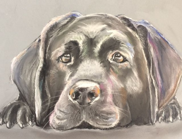 Black Labrador - Kathryn Leonhardt