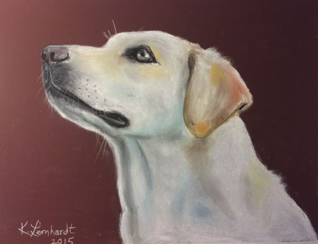 Female yellow labrador - Kathryn Leonhardt