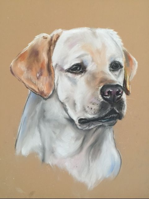 Yellow Labrador Retriever - Kathryn Leonhardt