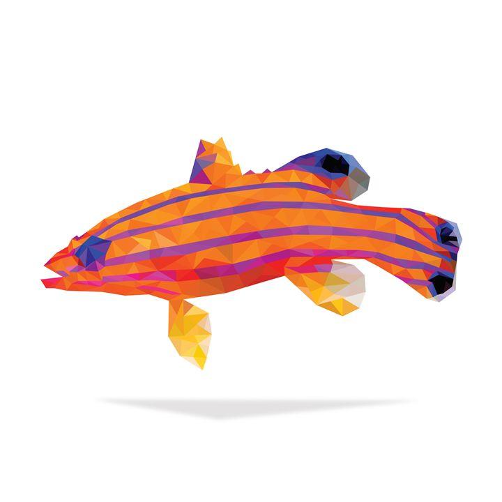 Geometric Abstract Candy Basslet - Aquanaut Studio