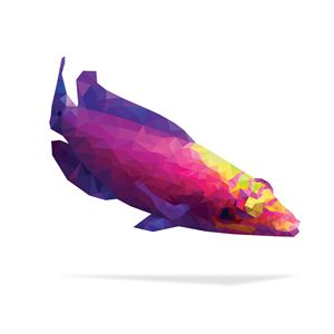 Geometric Abstract Mystery Wrasse