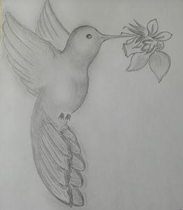 Flying hummingbird - Lorin