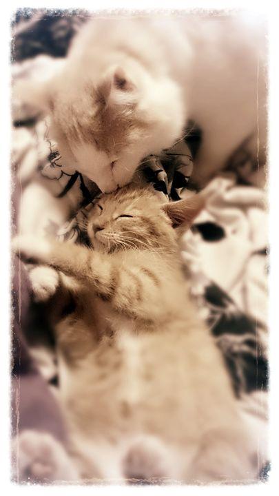 Kitty Love - Gabbys Art