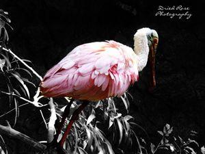 Pretty in Pink - Gabbys Art