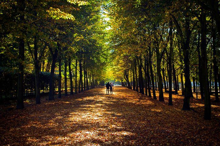Through the Fall - Various Photography