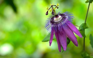 Purple Passion - Various Photography
