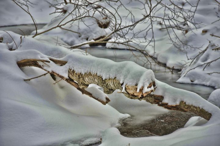 Winter Peace - PhotosbyNan