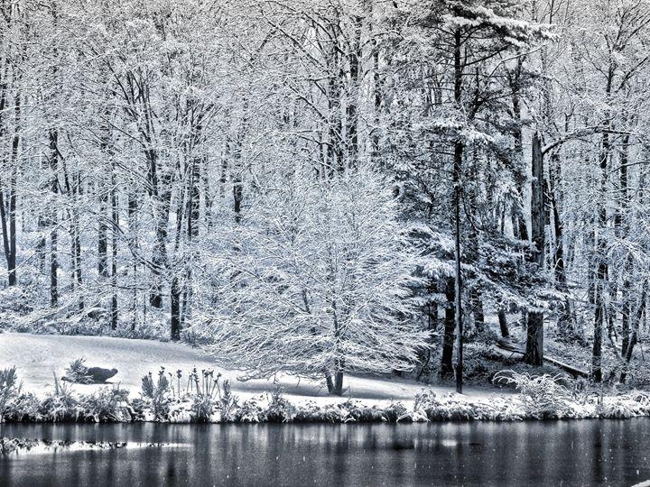 Snowy Day - PhotosbyNan
