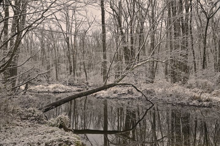First snowfall in the swamp - PhotosbyNan