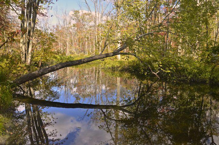 Summer at the Great Swamp - PhotosbyNan