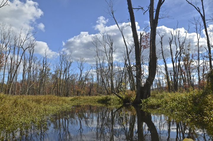 Sunny Swamp - PhotosbyNan