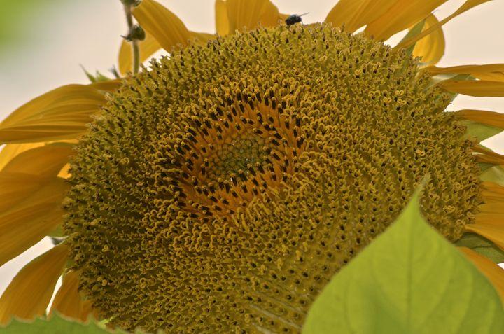 Sunny Close Up - PhotosbyNan
