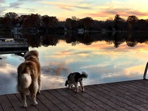 Sunset dogs