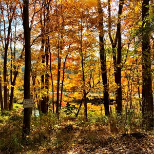 Fall at the Great Swamp