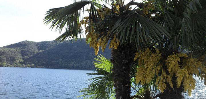 Palm bay - Cicaya