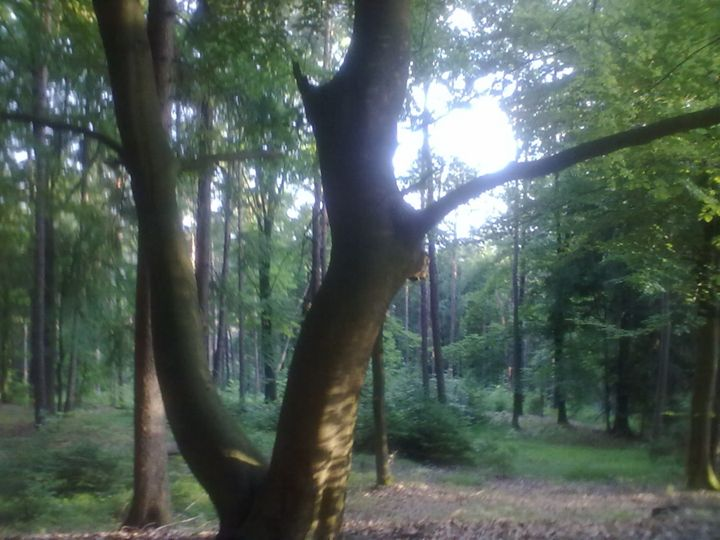 Long look at the tree - Cicaya