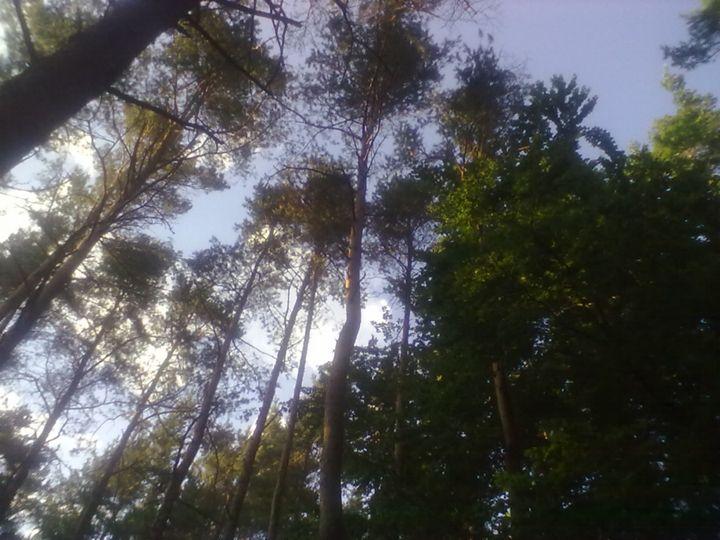 Treetop-Sky - Cicaya