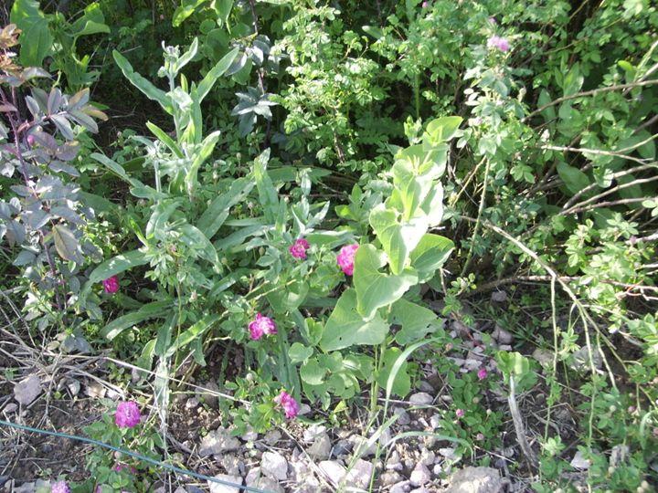 A spot of the garden 3 - Cicaya