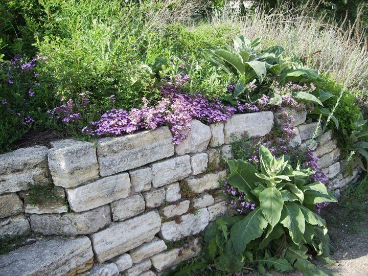 A spot of the garden 2 - Cicaya